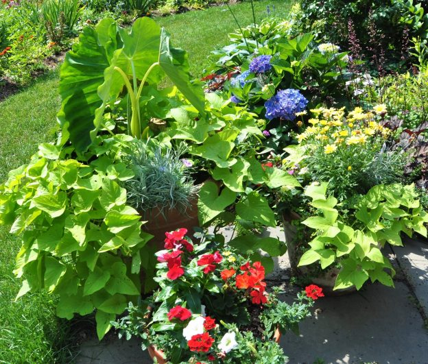 container-gardening-home-staging-1-scaled