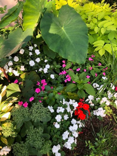 container-gardening-home-staging-131-rotated