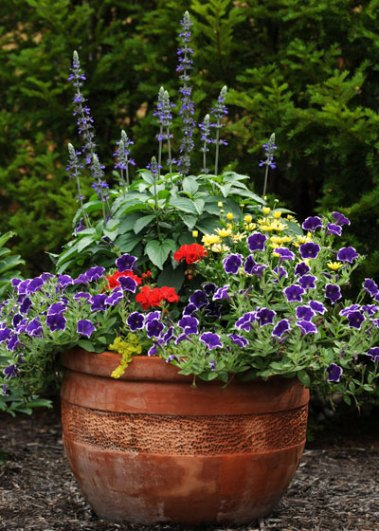 container-gardening-home-staging-133