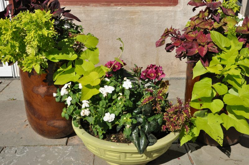 container-gardening-home-staging-135-scaled
