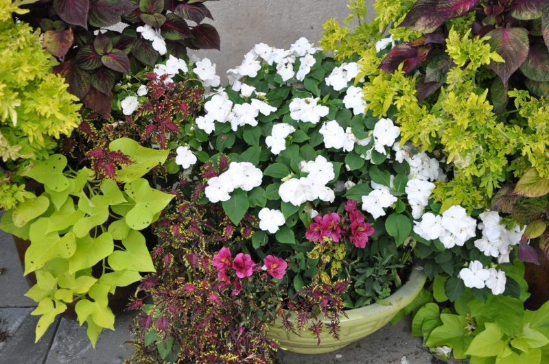 container-gardening-home-staging-139-scaled