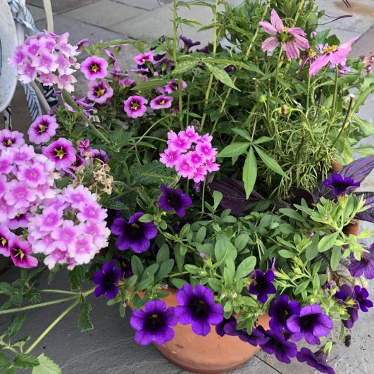 container-gardening-home-staging-14-scaled
