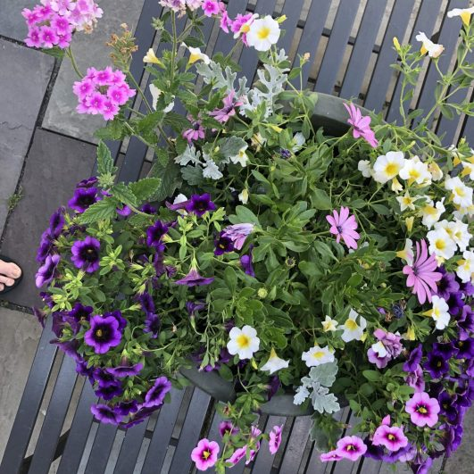 container-gardening-home-staging-16-scaled