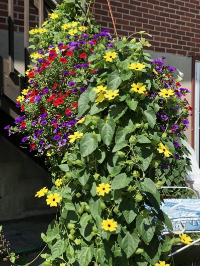 container-gardening-home-staging-17-scaled