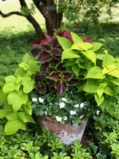 container-gardening-home-staging-21