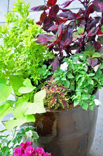 container-gardening-home-staging-24-scaled