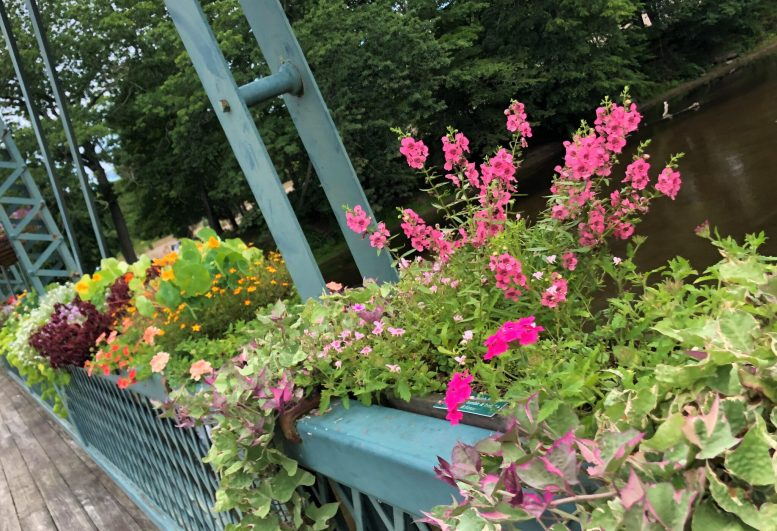 container-gardening-home-staging-25-scaled