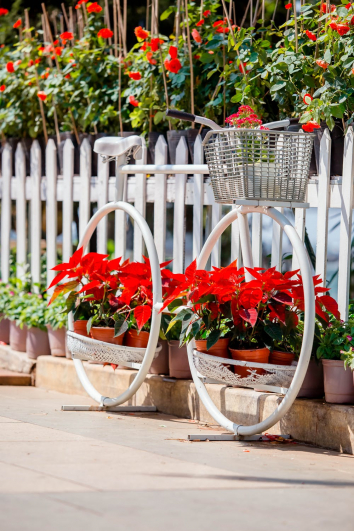 container-gardening-home-staging-27
