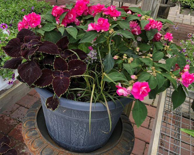 container-gardening-home-staging-28-scaled