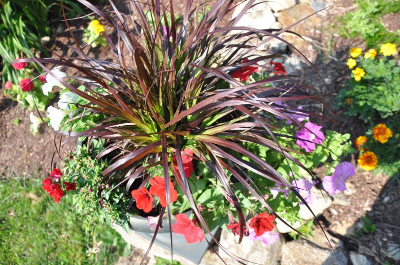 container-gardening-home-staging-3-scaled