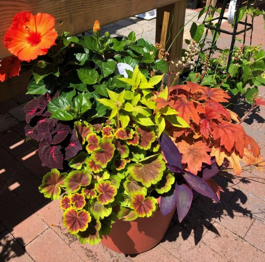 container-gardening-home-staging-30-scaled