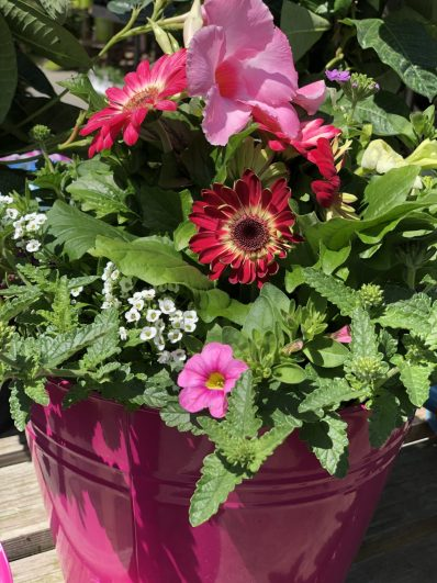 container-gardening-home-staging-32-scaled
