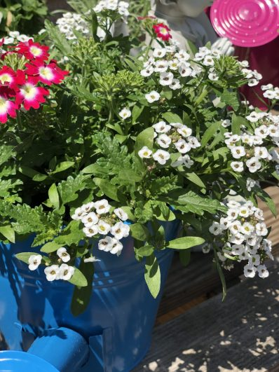 container-gardening-home-staging-33-scaled