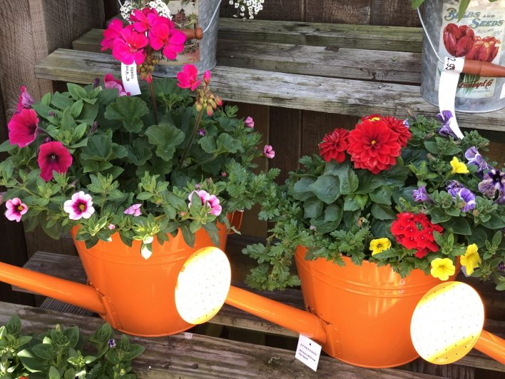 container-gardening-home-staging-34-scaled