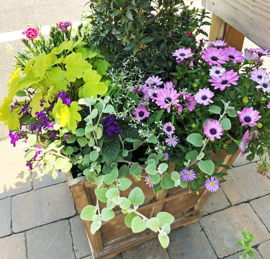 container-gardening-home-staging-43-scaled