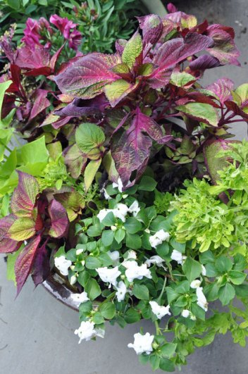container-gardening-home-staging-56