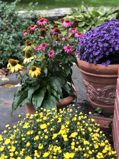 container-gardening-home-staging-62-scaled