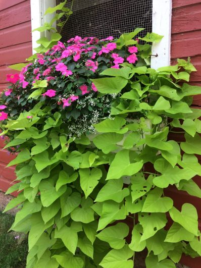 container-gardening-home-staging-76-1-scaled