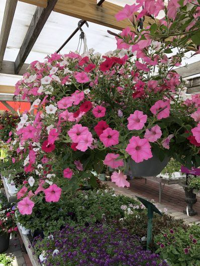 container-gardening-home-staging-78-1-scaled