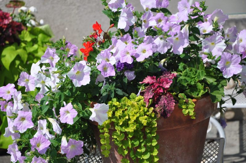 container-gardening-home-staging-8-scaled