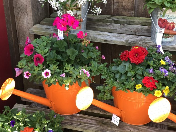 container-gardening-home-staging-84-1-scaled