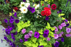 container-gardening-home-staging-12