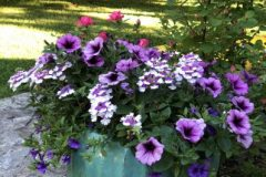 container-gardening-home-staging-13-scaled