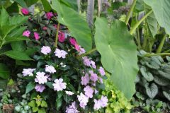 container-gardening-home-staging-140-scaled
