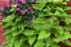 container-gardening-home-staging-143-scaled