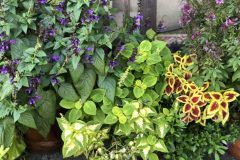 container-gardening-home-staging-19-scaled