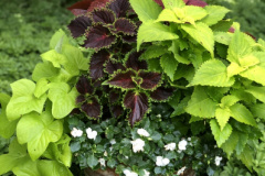 container-gardening-home-staging-2