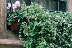 container-gardening-home-staging-31-scaled