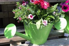 container-gardening-home-staging-36-1-scaled