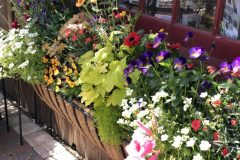 container-gardening-home-staging-37-scaled