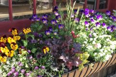 container-gardening-home-staging-42-scaled