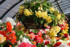 container-gardening-home-staging-74-1-scaled