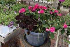 container-gardening-home-staging-77-1-scaled