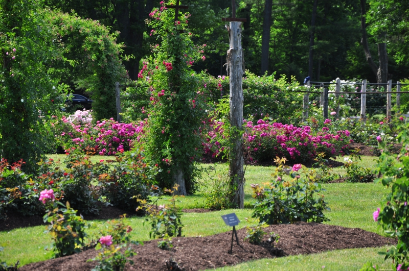 elizabeth-park-rose-gardens-west-hartford (11)