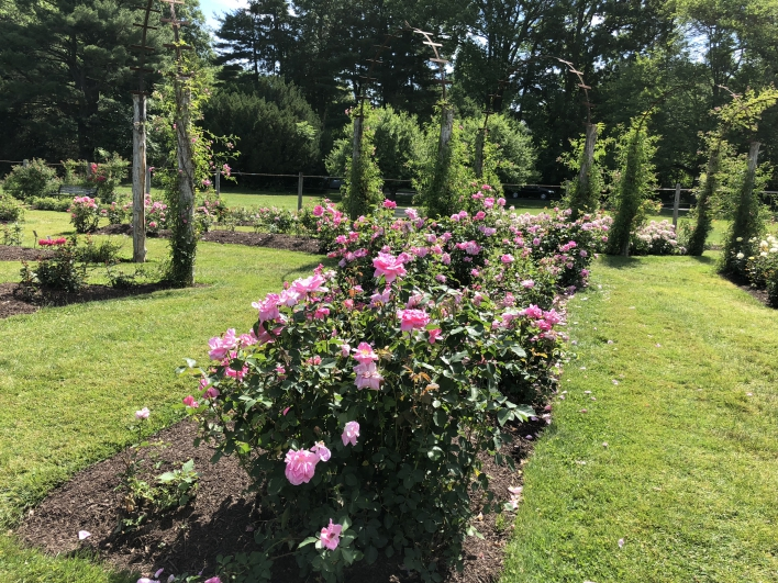 elizabeth-park-rose-gardens-west-hartford (16)