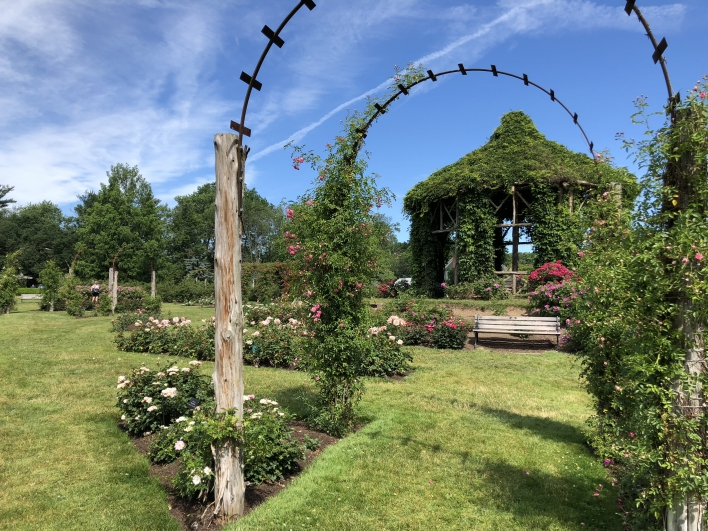 elizabeth-park-rose-gardens-west-hartford (24)