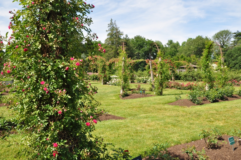 elizabeth-park-rose-gardens-west-hartford (33)