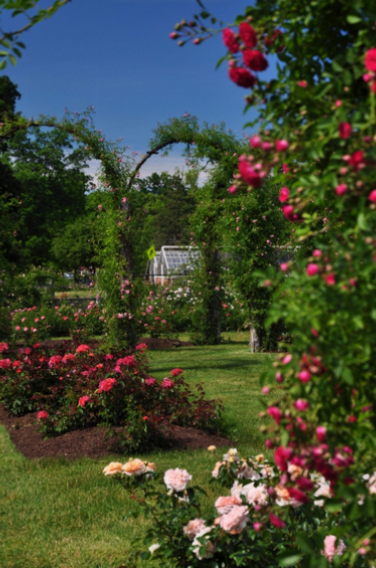 elizabeth-park-rose-gardens-west-hartford (7)