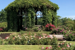 elizabeth-park-rose-gardens-west-hartford (18)