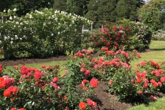 elizabeth-park-rose-gardens-west-hartford (19)