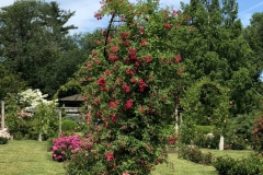 elizabeth-park-rose-gardens-west-hartford (20)