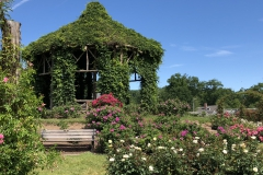 elizabeth-park-rose-gardens-west-hartford (25)
