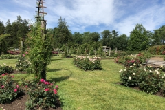elizabeth-park-rose-gardens-west-hartford (27)