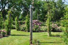 elizabeth-park-rose-gardens-west-hartford (39)
