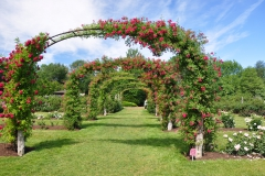 elizabeth-park-rose-gardens-west-hartford (5)