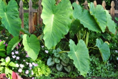 September Blooming Plants (195)